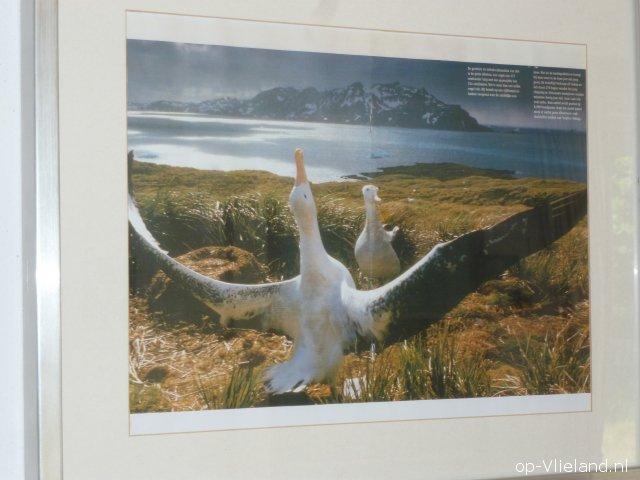 Albatros, 6 persoons vakantiehuis in de duinen bij het strand